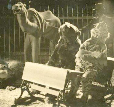 """Afbeelding van """"Circus Sodesco"""""""